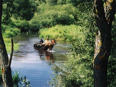 Лиозно. Река Мошна.