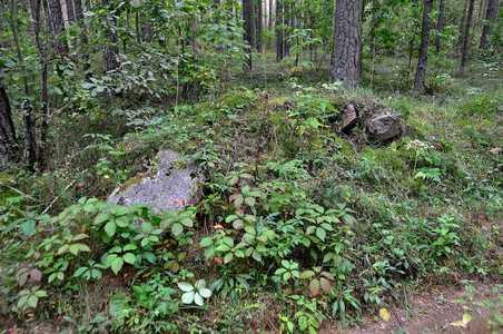 мацевы бывшего еврейского кладбища.