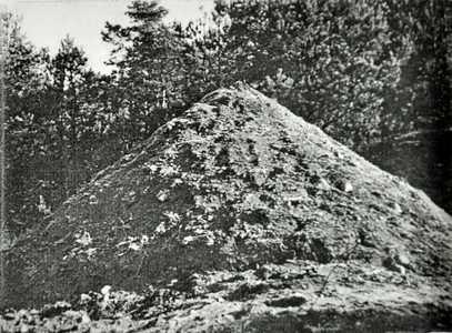 Холм на месте расстрела евреев.